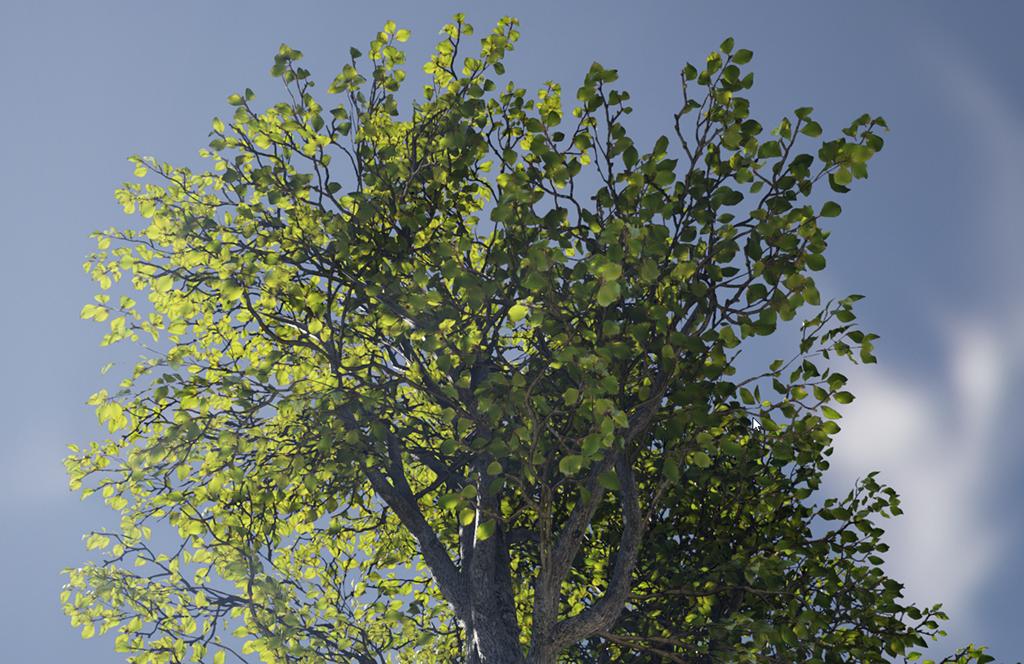 Realistic Foliage Lighting